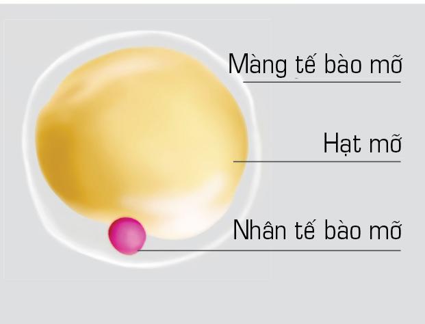 PGS.TS Nguyễn Hoài Nam: Mỡ trắng - thủ phạm gây thừa cân, béo phì